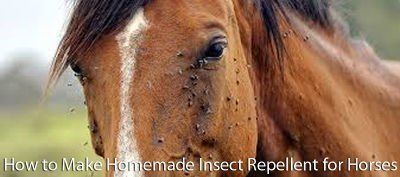 Make Homemade Insect Repellent for Horses